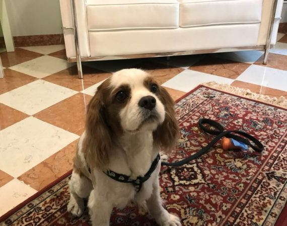 Albergo Fontana - hotel pet friendly - Amici del cane